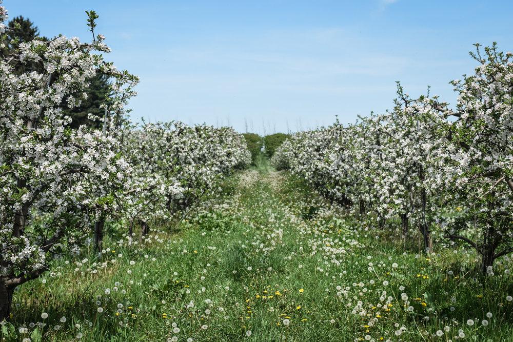 overhiser orchards-7.jpg