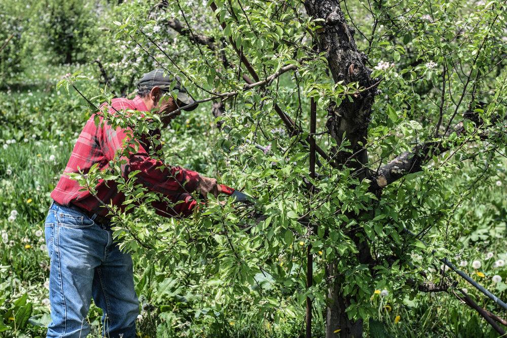 overhiser orchards-8.jpg