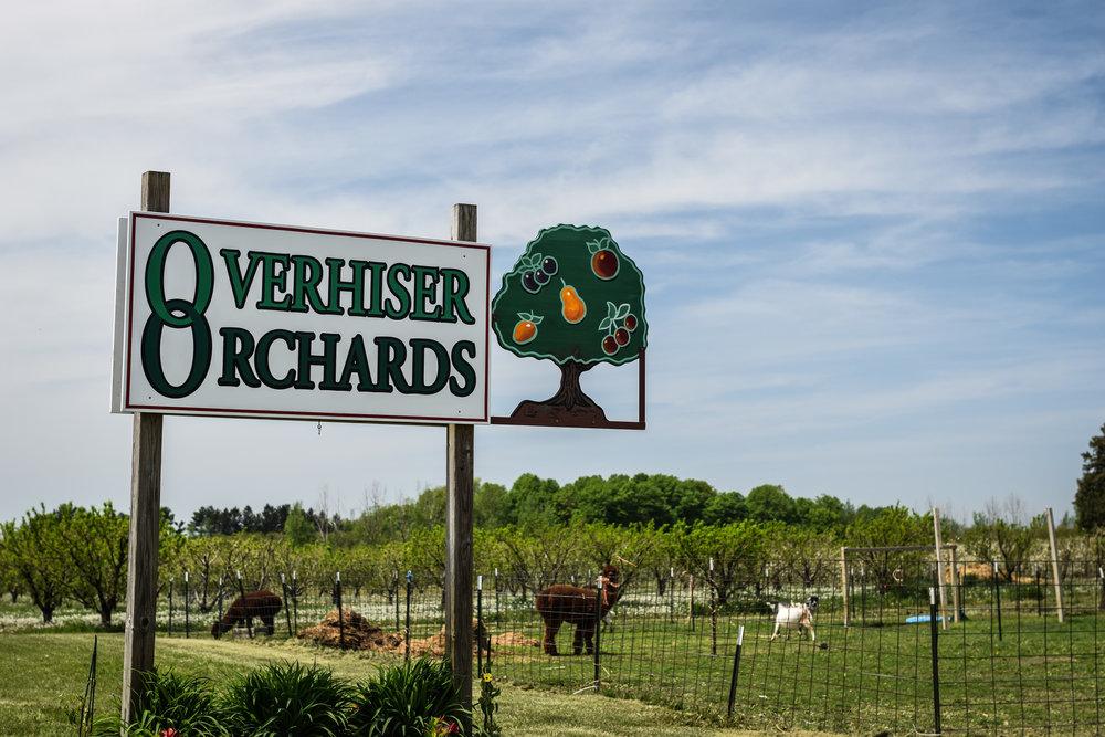overhiser orchards-5.jpg
