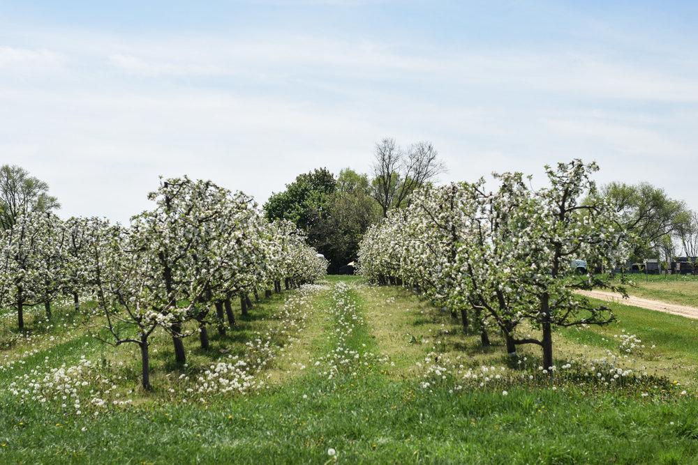 overhiser orchards-3.jpg