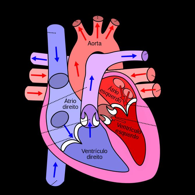 Foto retirada de Wikipédia