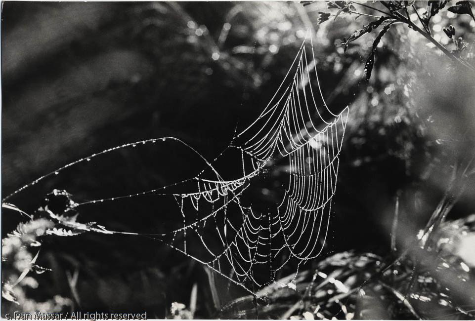 Spiderweb.  Concord, MA