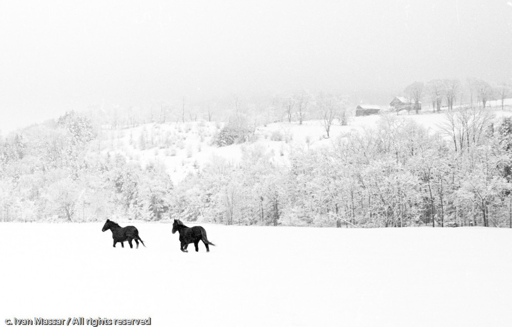 Winter Horses.  Pittsfield, VT