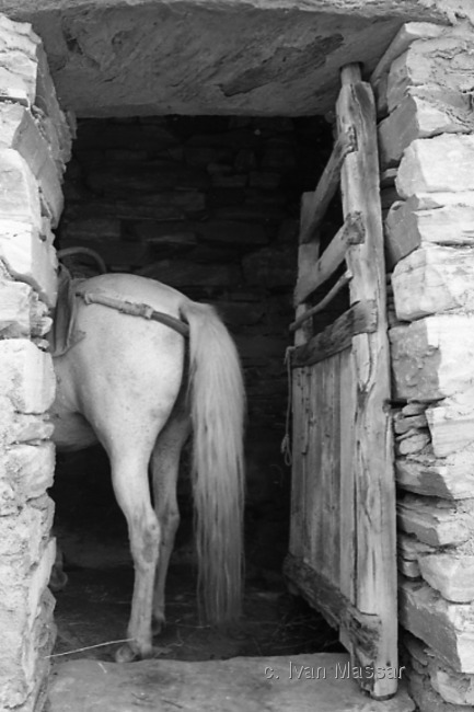 Horse and Cellar Door.  Kardiani, Tinos Island, Greece
