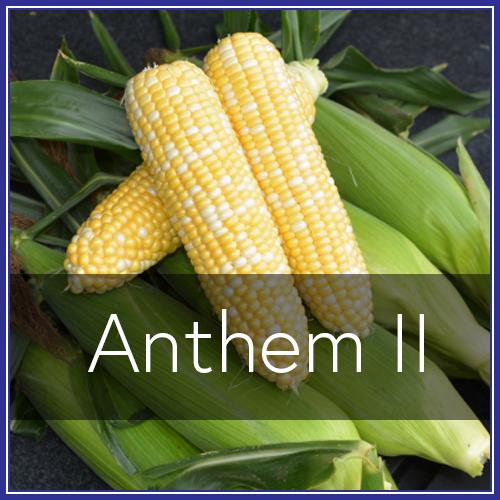 Anthem II.png