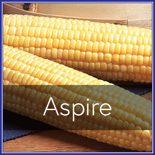 Aspire.png