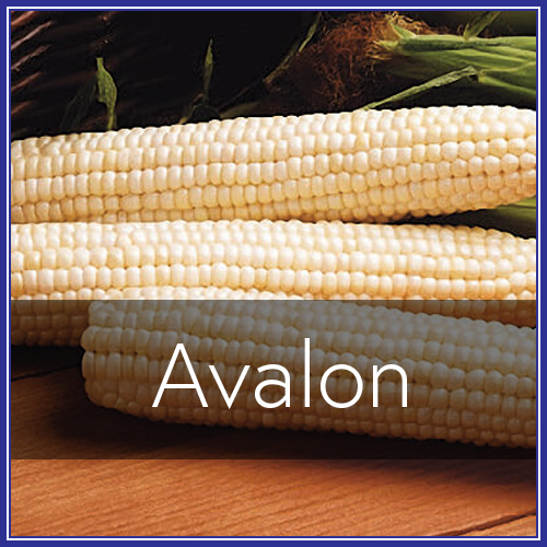 Avalon.png