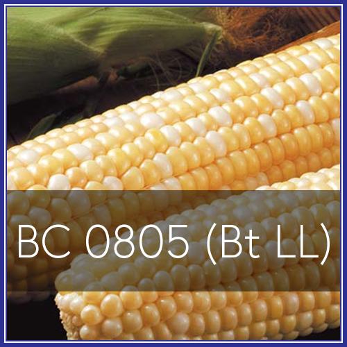 BC 0805.png
