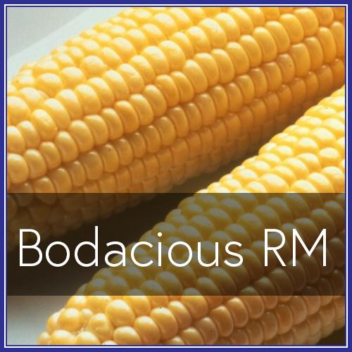 Bodacious RM.png