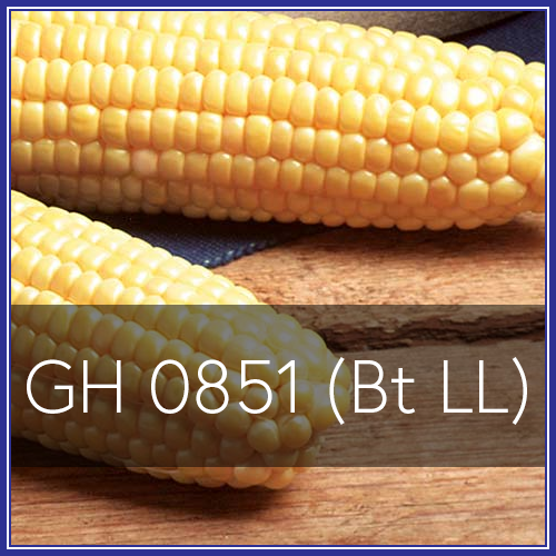 GH 0851.png