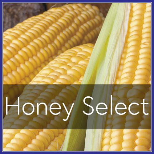 Honey Select.png