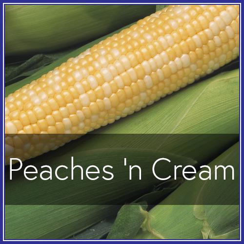 Peaches Cream.png