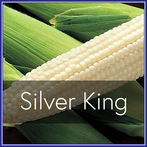 Silver King.png
