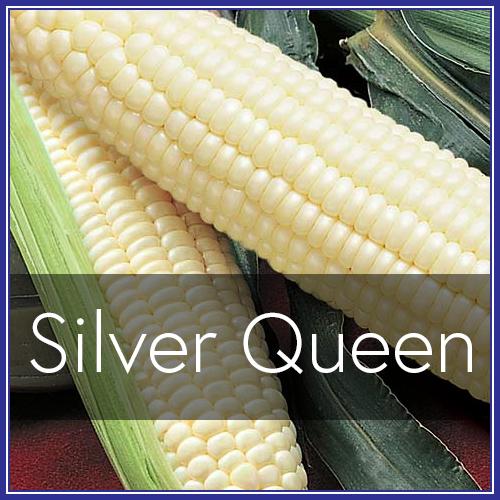 Silver Queen.png