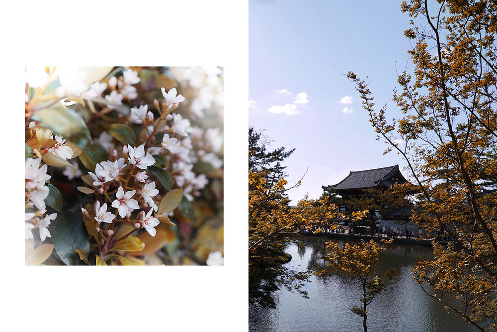 Left: garden in Hiroshima. Right: Temple in Nara Park.