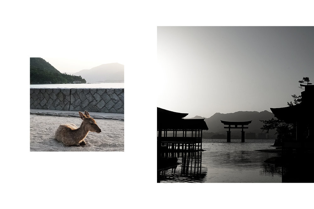 Left: Deer. Right: Grand Torii Gate during sunset.
