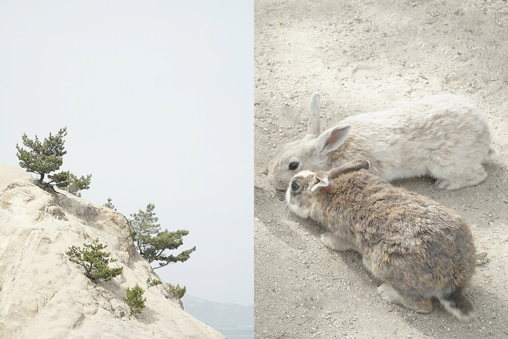 Left: Cliff on Okinoshima island. Right: Wild rabbits.