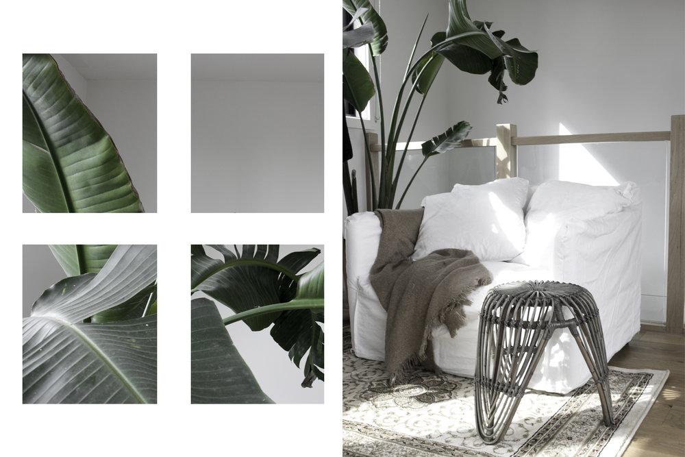 Left: Bird of paradise leaves, Right: Lounge