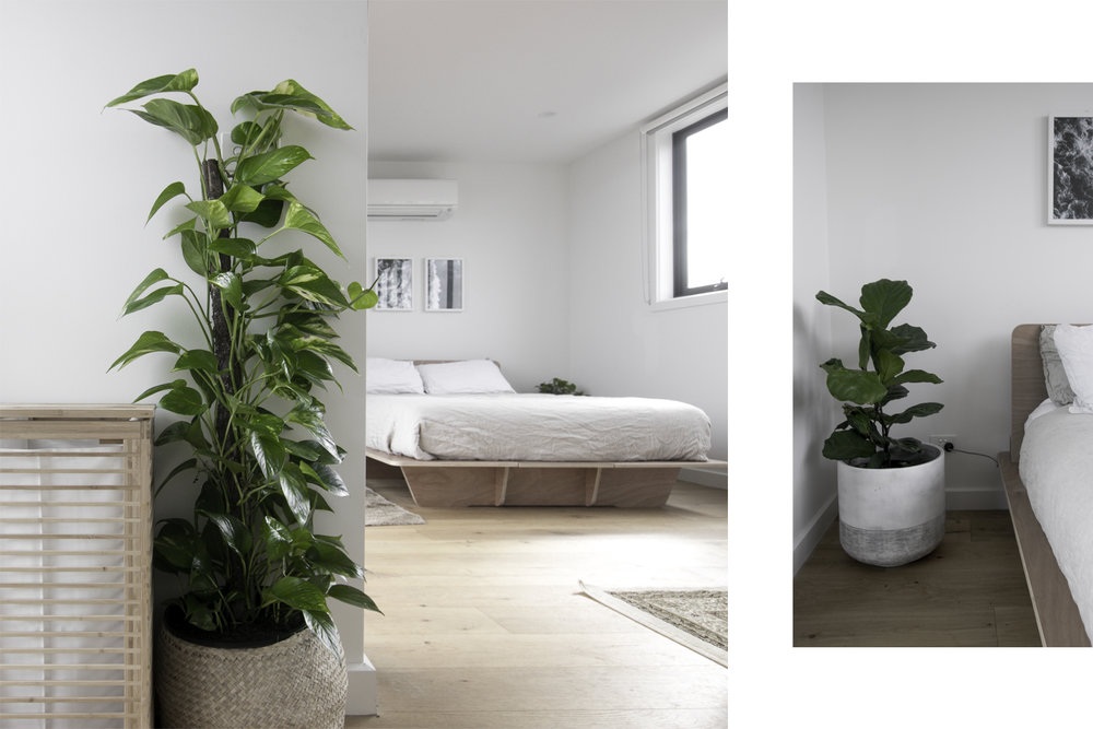 Left: Clothes hamper and pothos, Right: Fiddle Leaf Fig