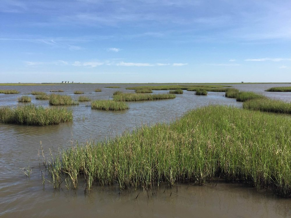 Fragmented smooth cordgrass (Spartina alterniflora) in Terrebonne Bay, LA