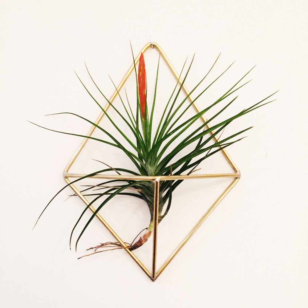 Brass Air Plant Holder - Medium