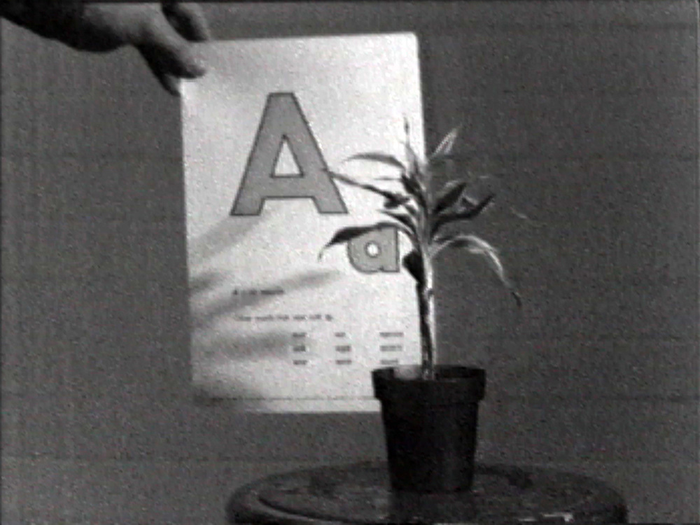 Teaching a Plant the Alphabet , 1972 18:40 min, b&w, sound  © John Baldessari.  Distributed by  EAI .