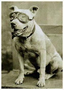 Bud the wonder dog