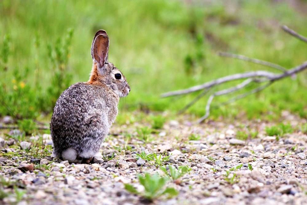 20110415-Rabbit E 01.jpg