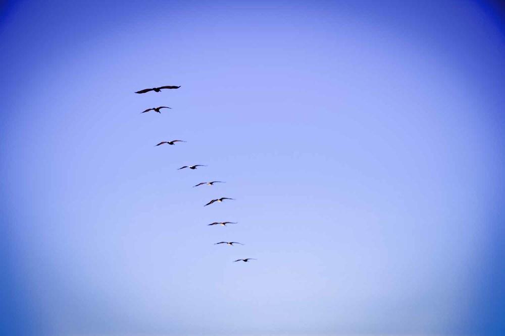 20110725-Pelican B 01.jpg