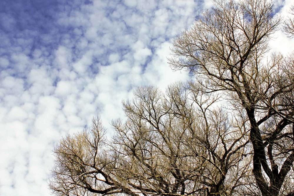 20101228-Branches D 01c.jpg