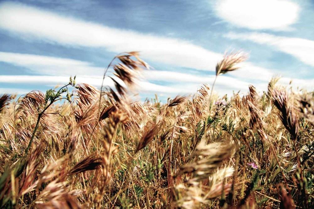 20110711-Grasses A 01c.jpg