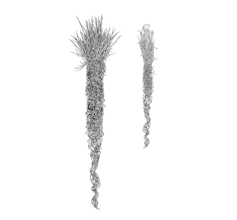 3 Illustration examples.jpg
