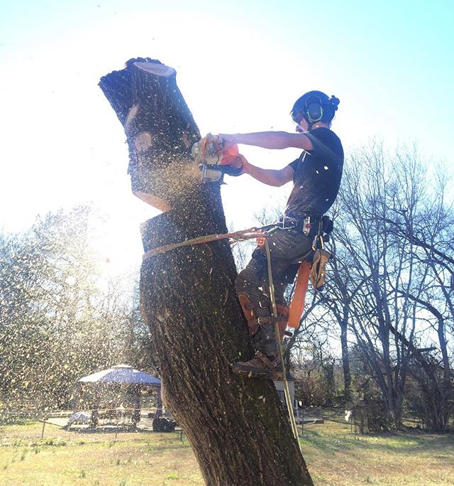 kevin taking out the last bits of a large elm which was overhanging a friend's house.  #stihltimbersports #arborist
