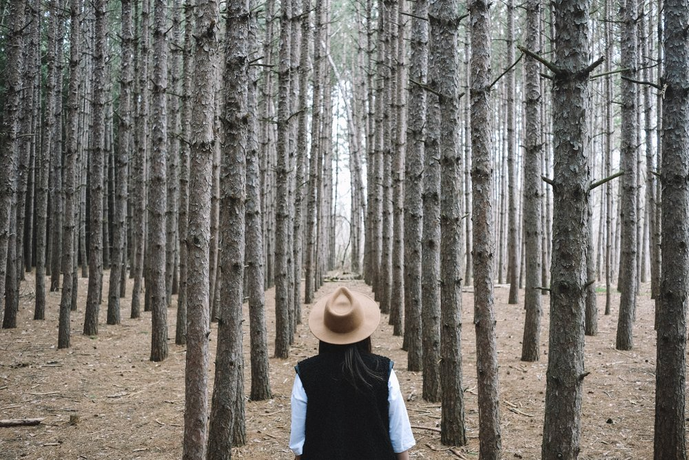 Kortright centre trees by a social media photographer
