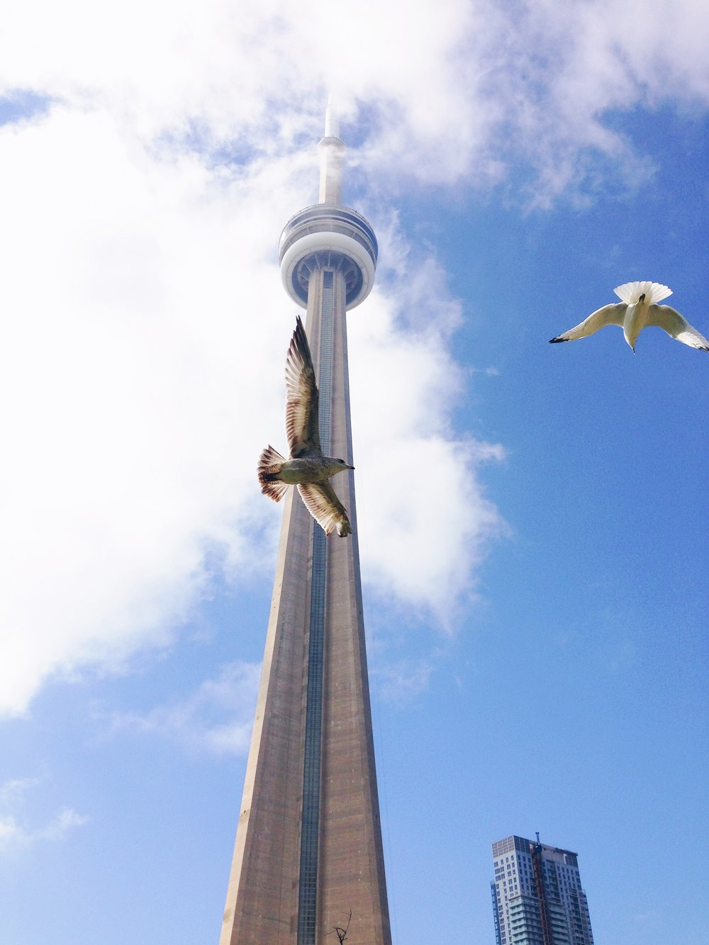 CN Tower in toronto by a social media photographer