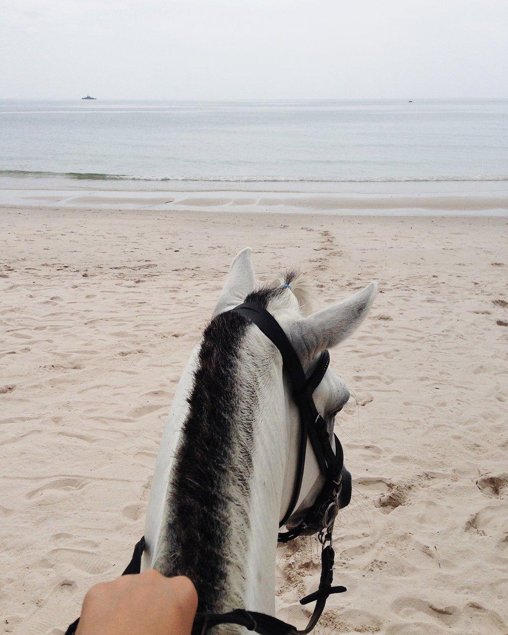 POV horse by a social media photographer