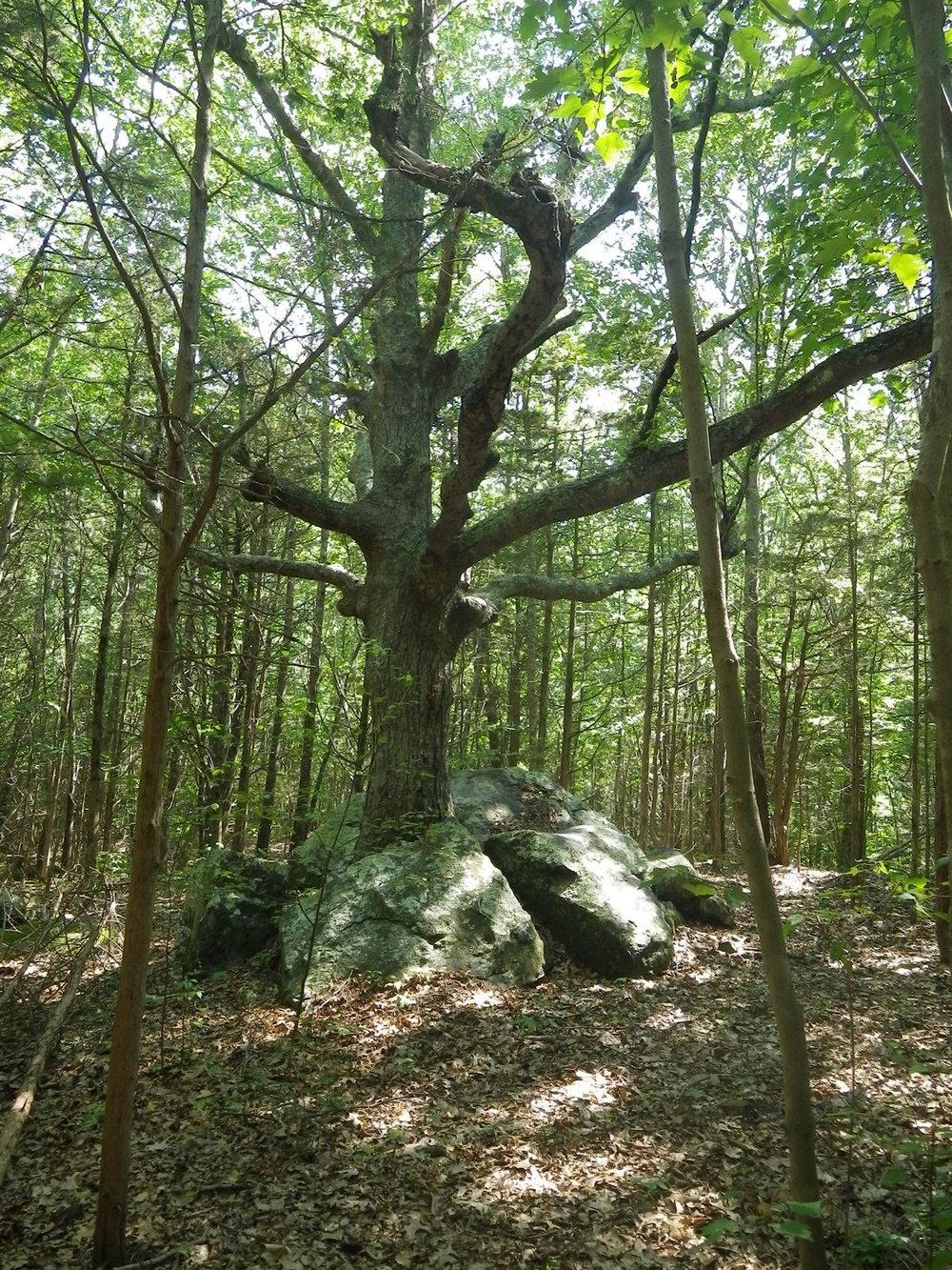 Fave Tree.JPG