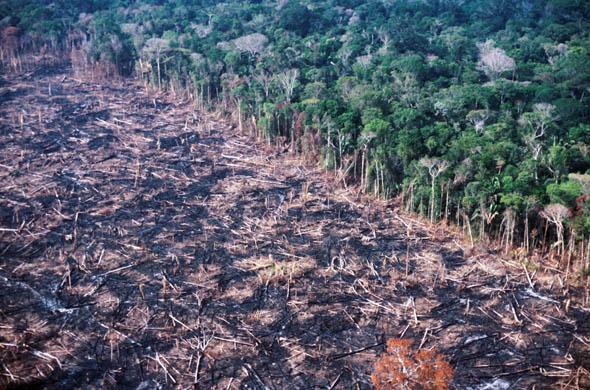 amazon-deforestation.jpg