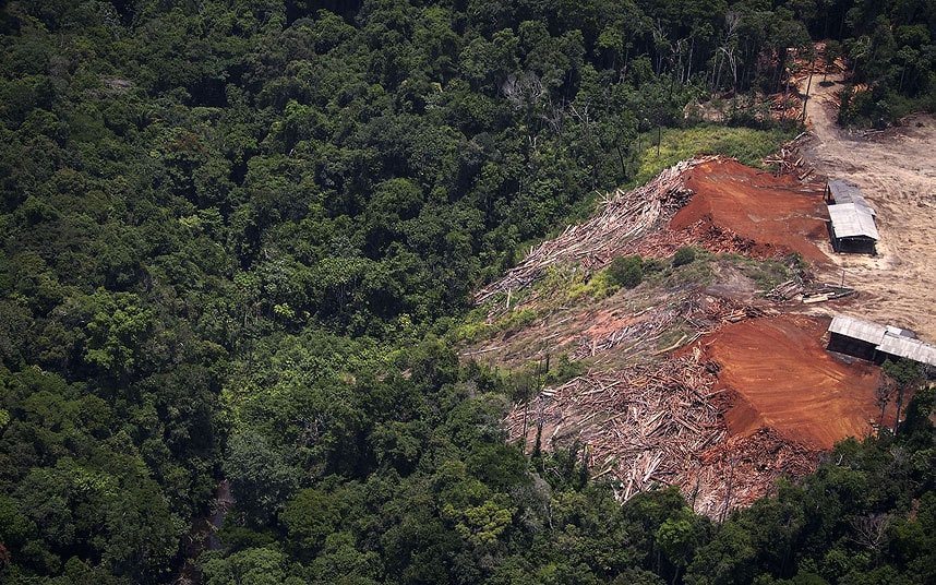 The Deforestation of God's Earth - Pope Francis Speaks Out