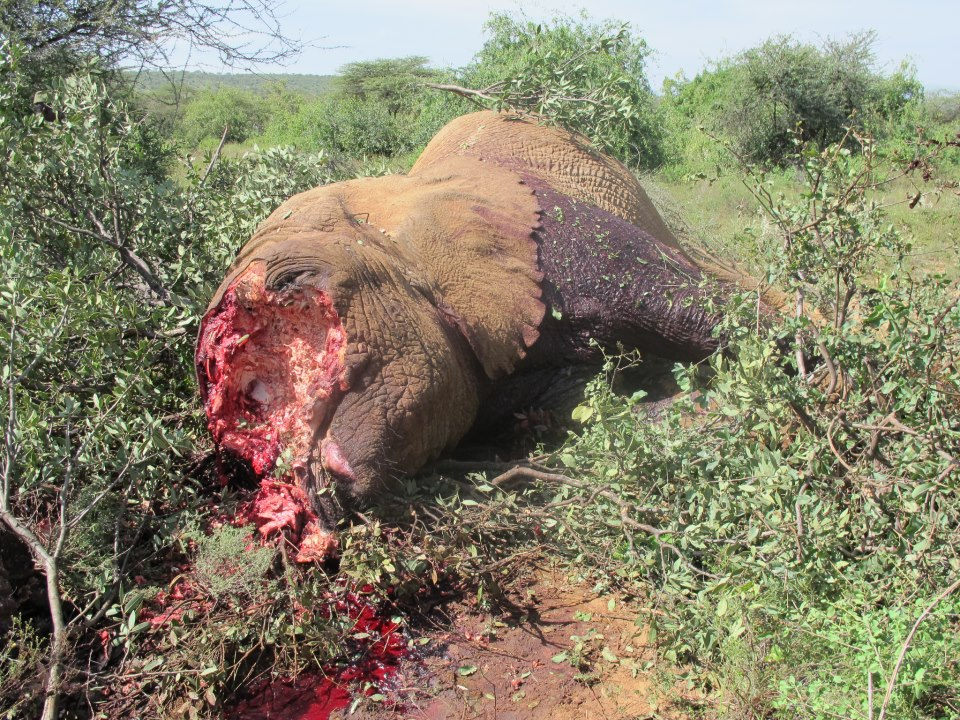 Elephant Jihad in Africa by Islamist extremists seeking to fund their terror with conflict ivory.