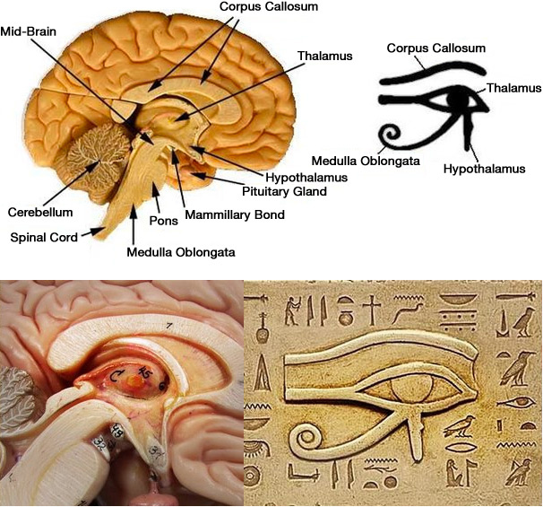 Foods That Activate And Decalcify Your Pineal Gland. — MOT MAG