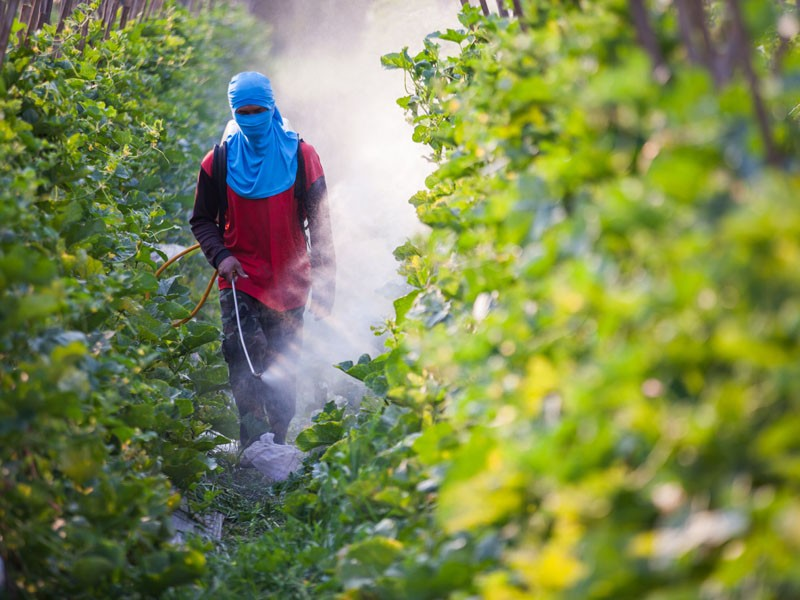 farmworker-pesticide_ittipon_shutterstock.jpg