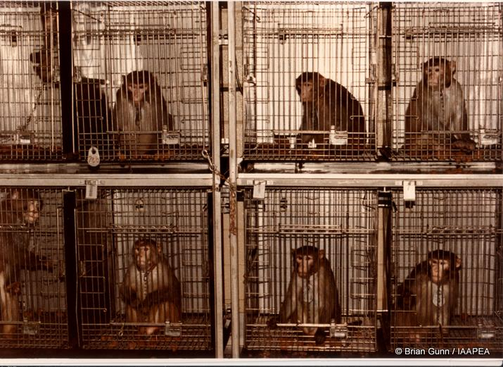 monkey-cages-lab-animal-testing-picture.jpg