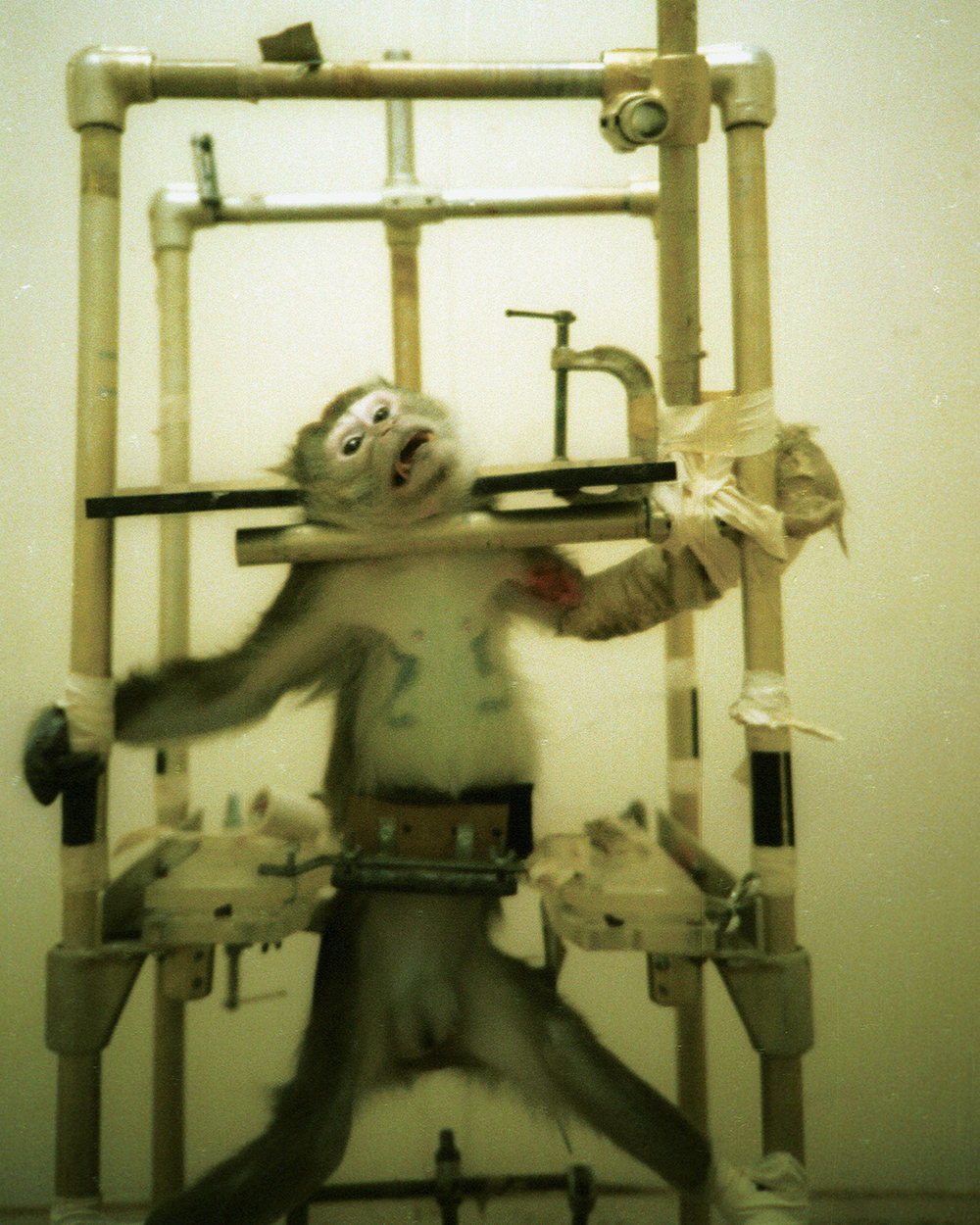 The Silver Spring Monkeys: The Case that launched PETA in 1981 (credit: PETA)