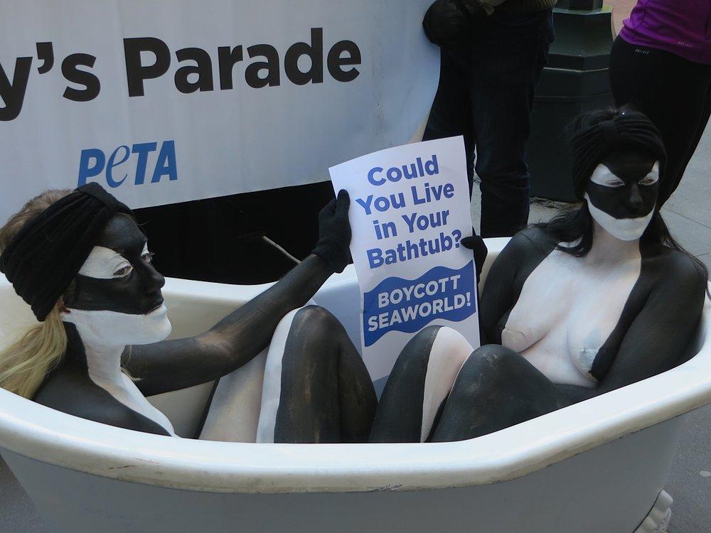 Orca-PETA-Seaworld.jpg