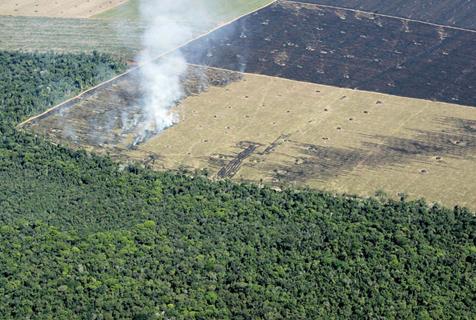 deforestation-1.jpg