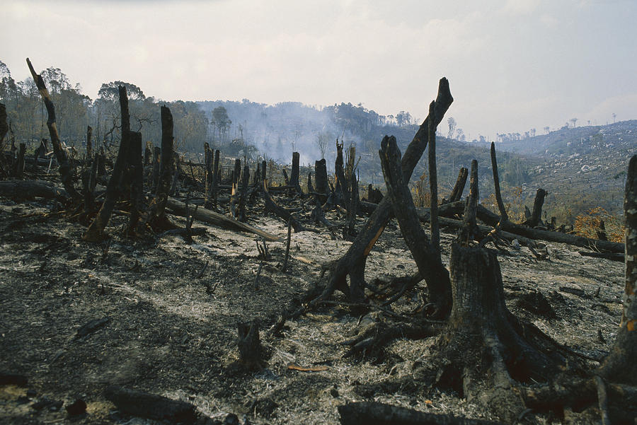 slash-and-burn-agriculture-where-konrad-wothe.jpg