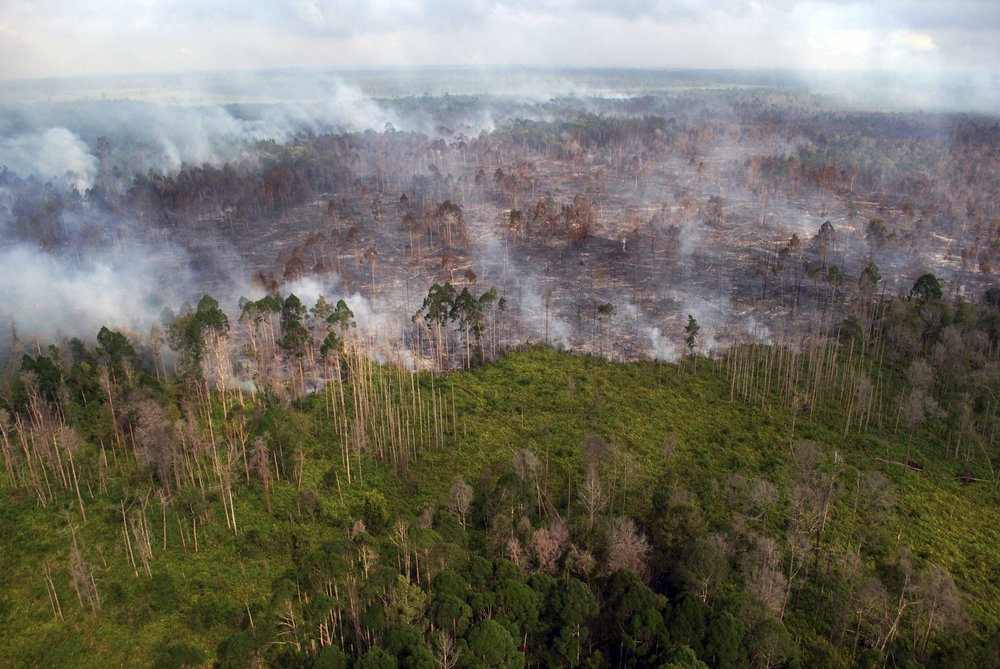 f-indonesia-forests-a-20160405.jpg