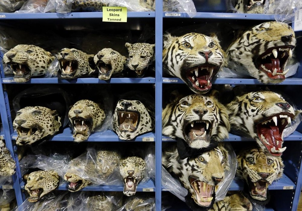 wildlifetrafficking_090716.jpg