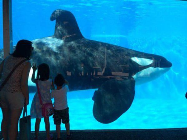 kids-seaworld-dorsal-fin.jpg